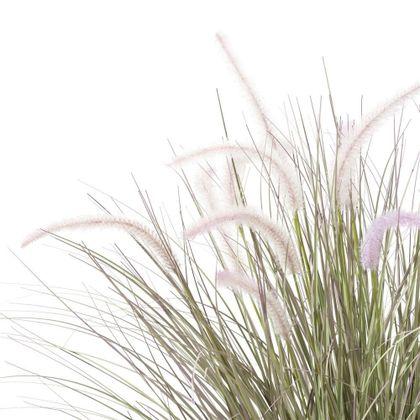 COCO maison Pennisetum Plant