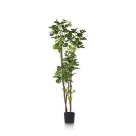 COCO maison Polyscias Plant