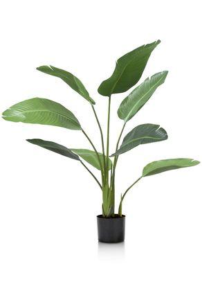 COCO maison Strelitzia Plant