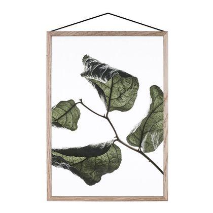 Moebe Floating Leaves 03 Poster