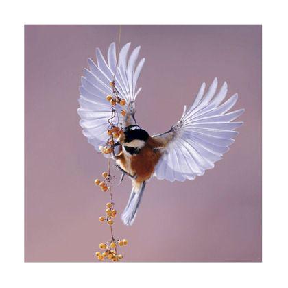 Trendhopper Bright wings Wanddecoratie