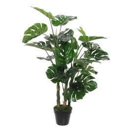 Trendhopper Monstera Plant in Pot