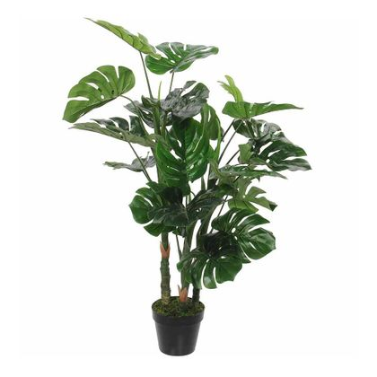 Trendhopper Monstera Plant in Pot